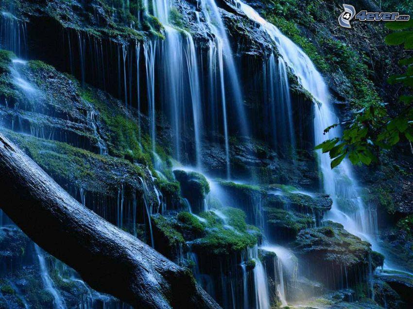 Wasserfall im Urwald, Stamm