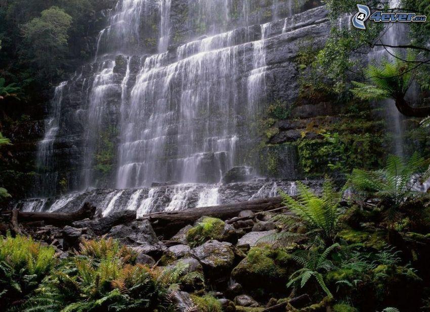 Wasserfall im Urwald