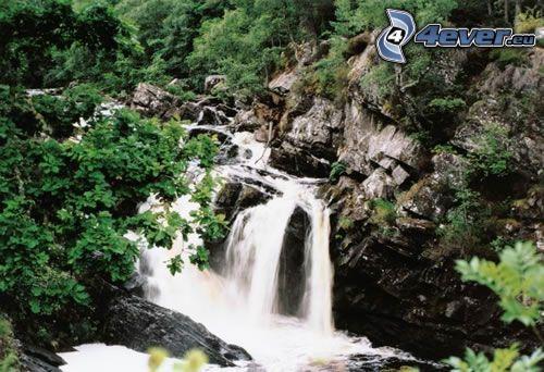Wasserfall im Wald, Bach