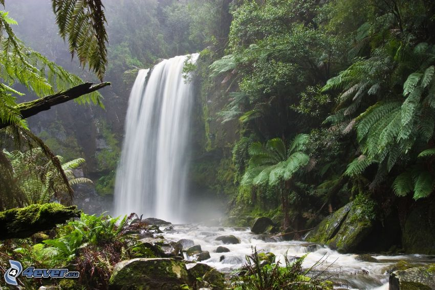 Wasserfall im Wald, Grün, Fluss, Bach, Farne