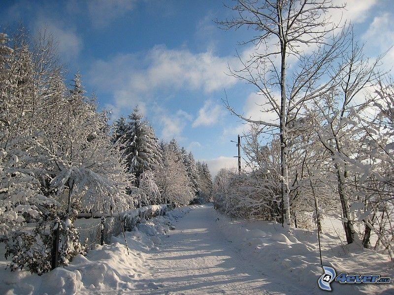 Weg im Winter, Schnee, verschneite Bäume