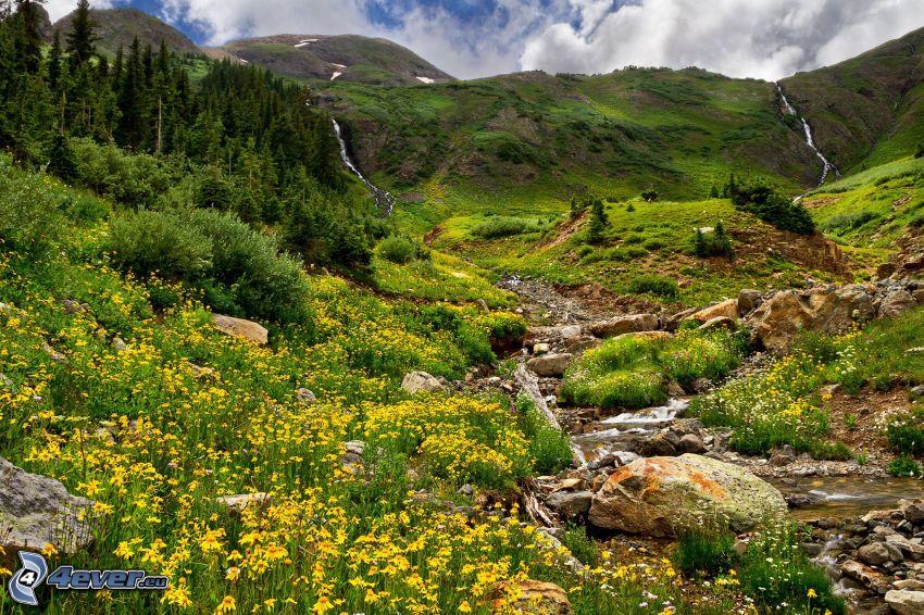 Wiese, Hügel, Bach, gelbe Blumen