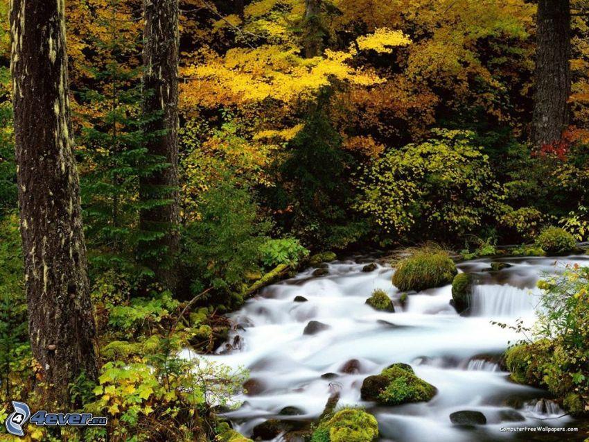 Wildbach, Bäume, gelbe Blätter