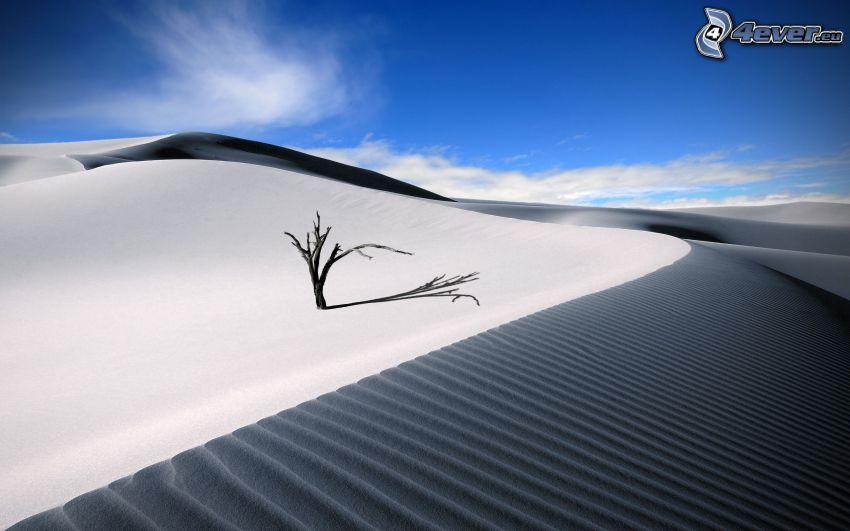 Wüste, Dünen, trockener Stamm