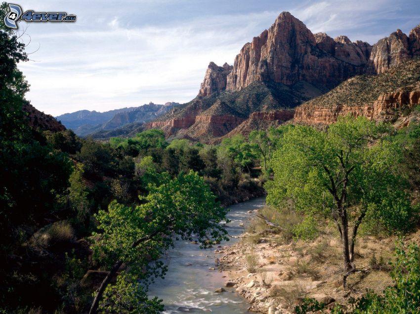 Zion National Park, USA, Bach, grüne Bäume