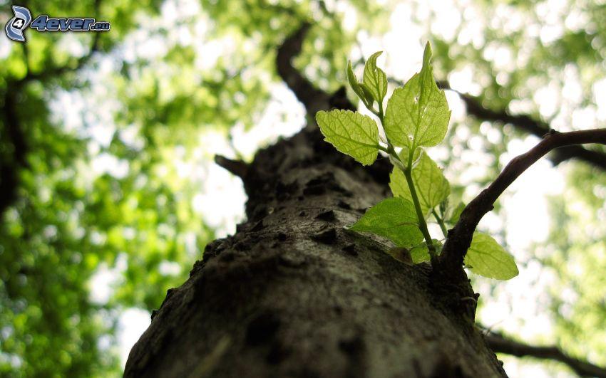 Laubbaum, Stamm, grüne Blätter