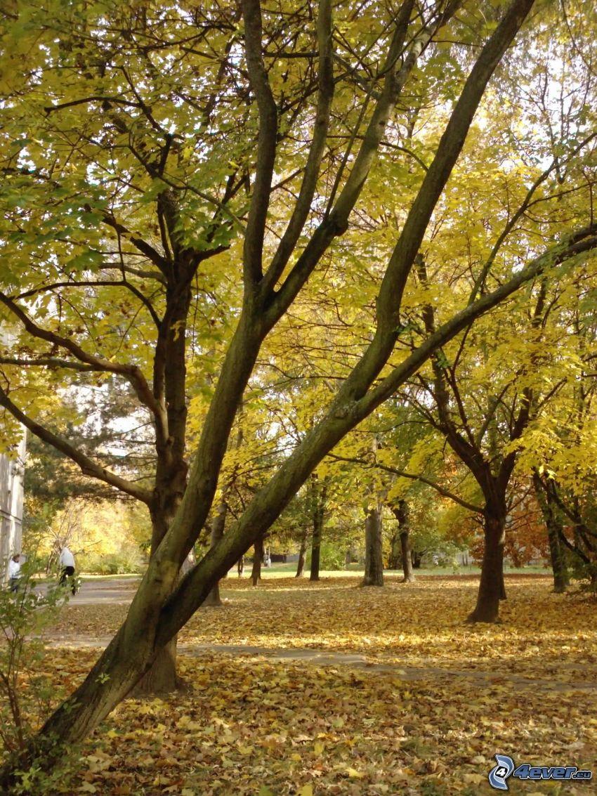 Laubbäume, Park, trockene Blätter