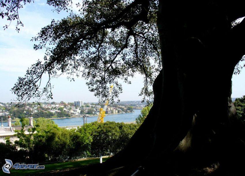 mächtiger Baum, Stamm, Blick auf die Stadt