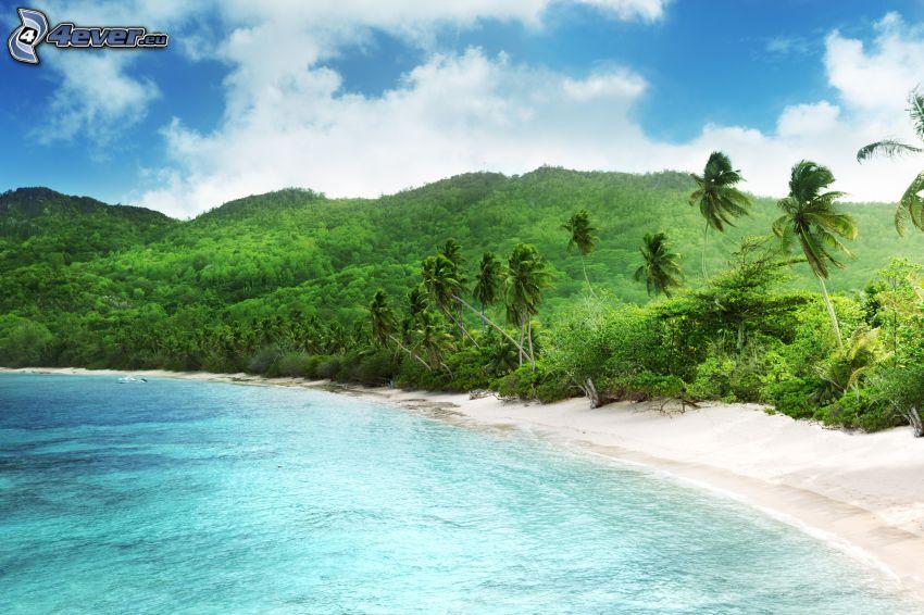 Küste, Hügel, Palmen am Strand, Meer