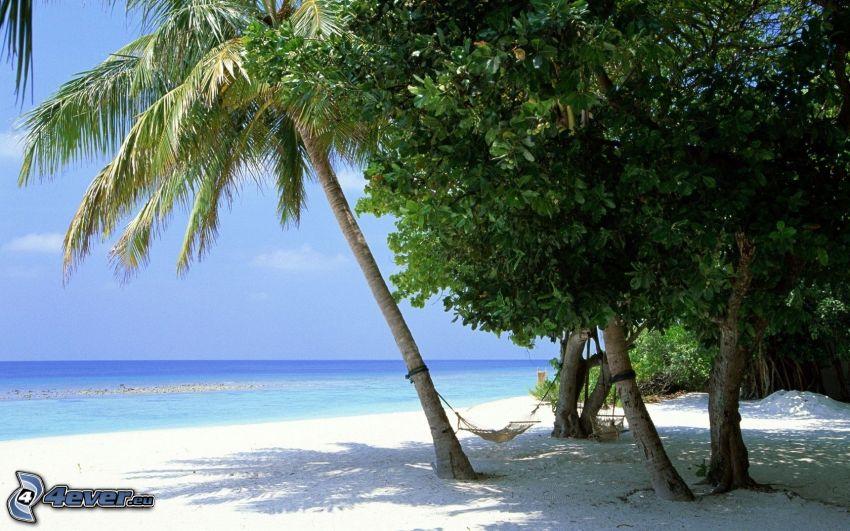 Meer, Palmen am Strand, Hängematte