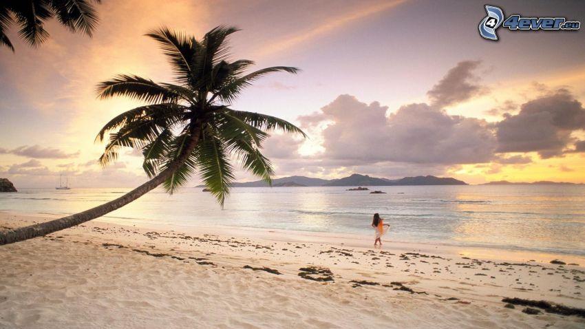 Meer, Strand, Palme, Wolken