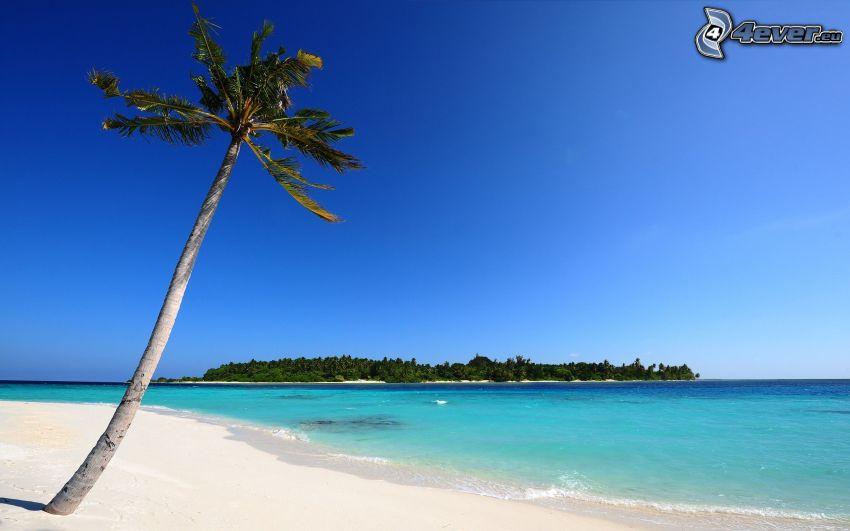 Palme über dem Sandstrand, azurblaues Sommermeer, Insel