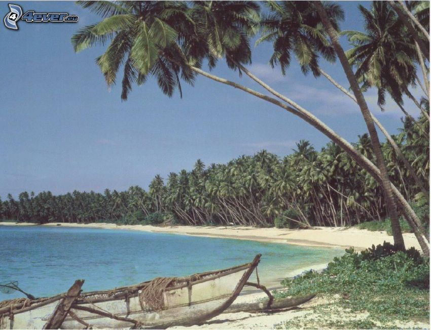Palmen am Strand, Boot