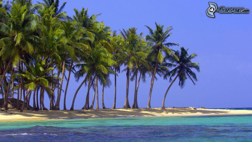 Palmen am Strand, Küste, azurblaues Meer