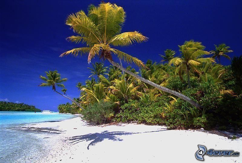 Palmen am Strand, Sand, Meer