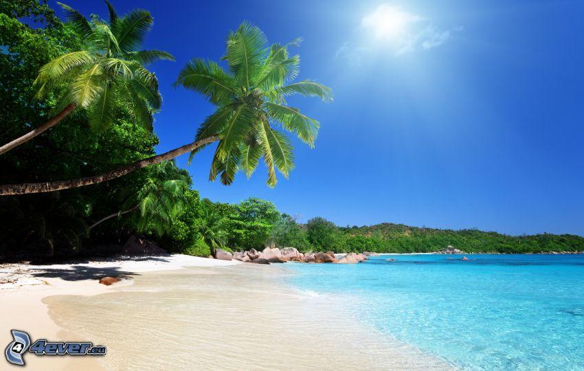 Palmen über dem Meer, azurblaues Sommermeer, Strand, Palmen, Sonne