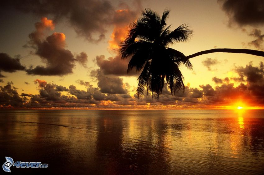 Palmen über dem Meer, Orange Sonnenuntergang über dem Meer, Wolken
