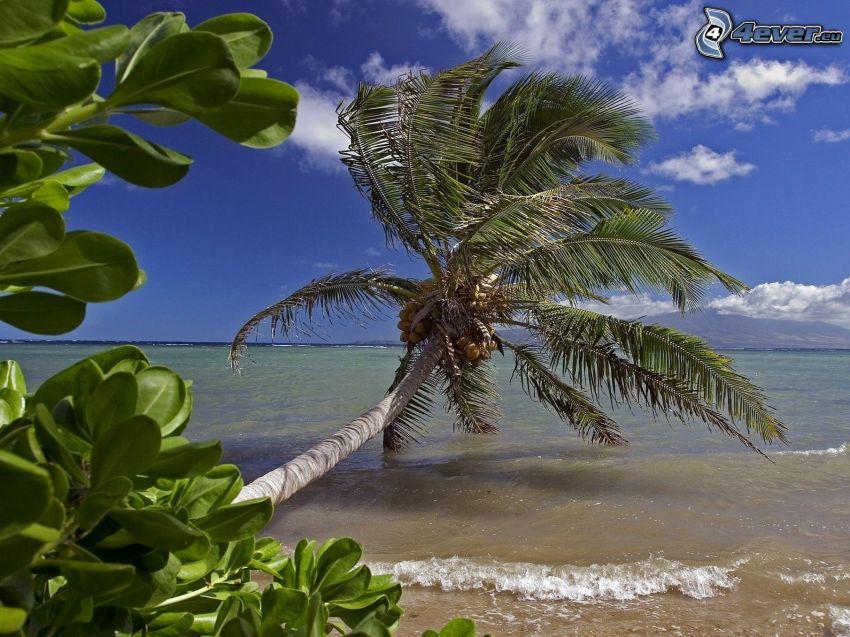 Palmen über dem Meer