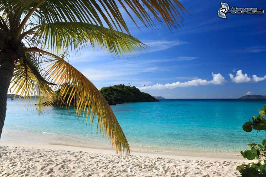 Sandstrand, azurblaues Meer, Palme, Himmel