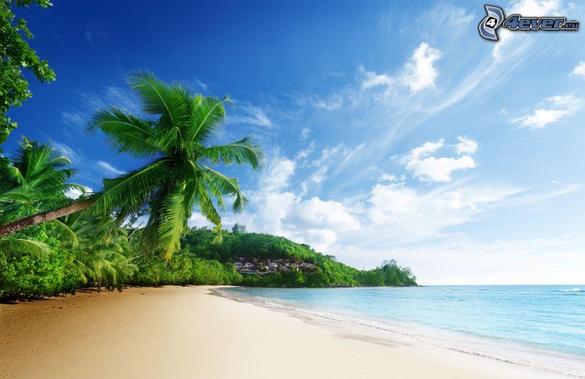 Sandstrand, Palme, Meer