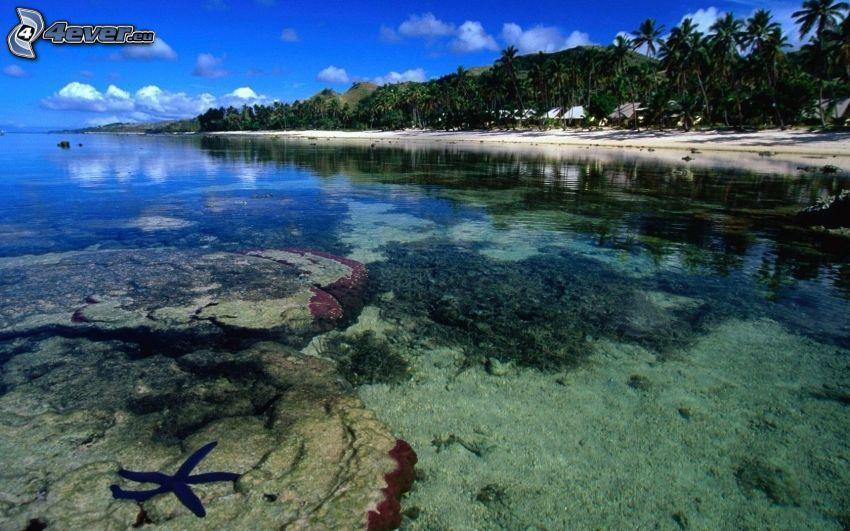 seichtes azurblaues Meer, Meeresboden, Seestern, Strand
