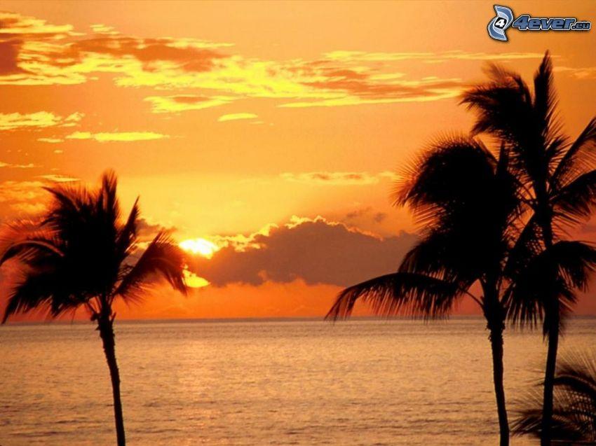 Sonnenuntergang auf dem Meer, Maui, Hawaii, Palmen, Meer