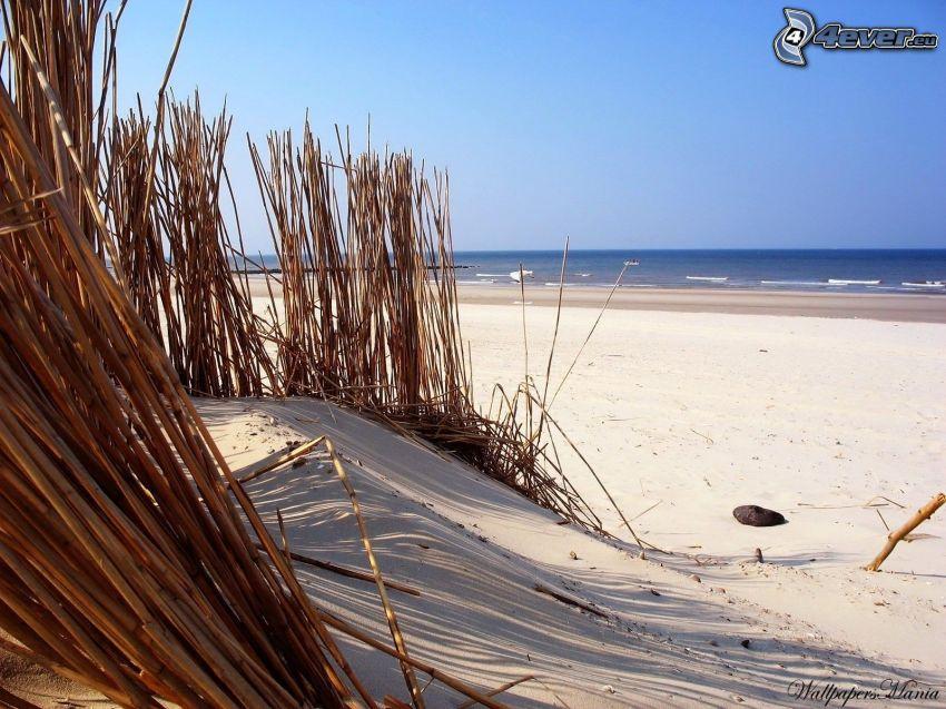 Strand, Meer, Pflanzen
