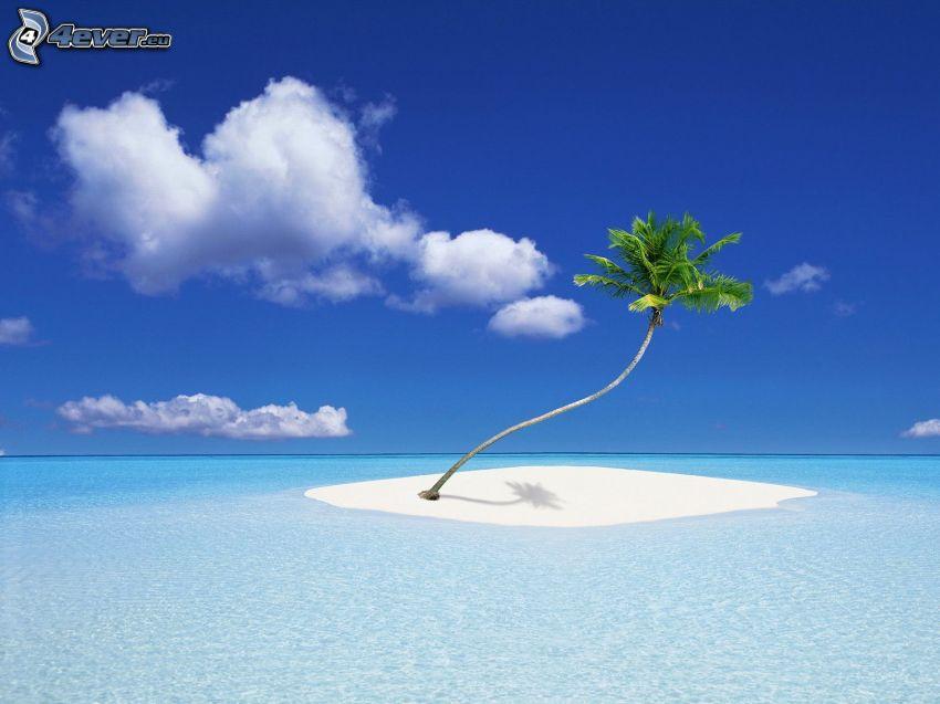 tropische Insel, Palme, Meer