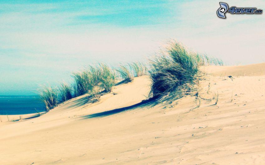 Wüste, Gras, Meer