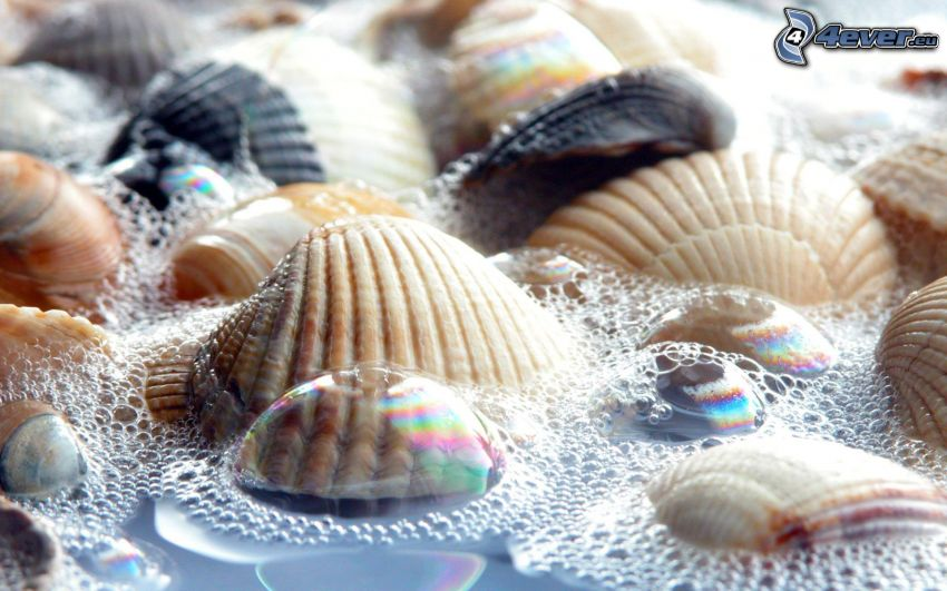 Muscheln, Blasen, Wasser