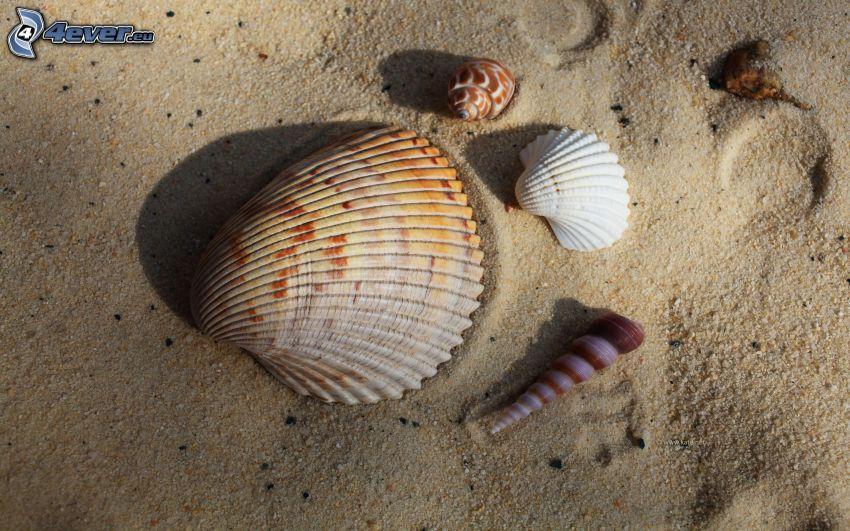 Muscheln, Sand