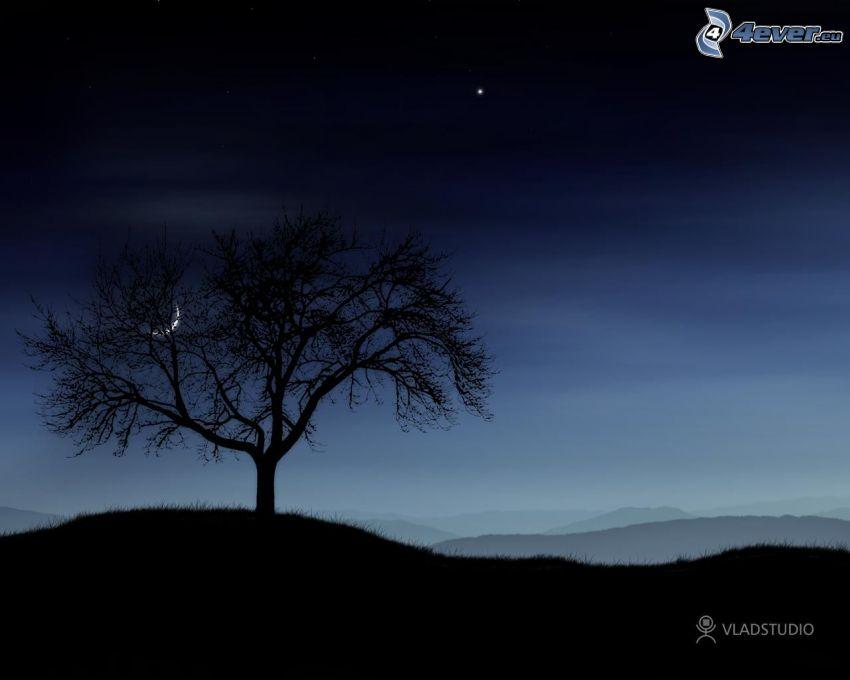 nächtliche Landschaft, einsamer Baum