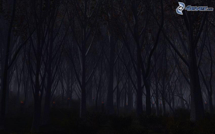 nächtlicher Wald