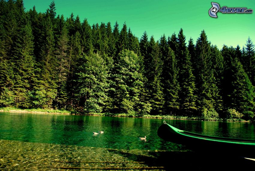 Nadelwald, Fluss, Boot am Ufer