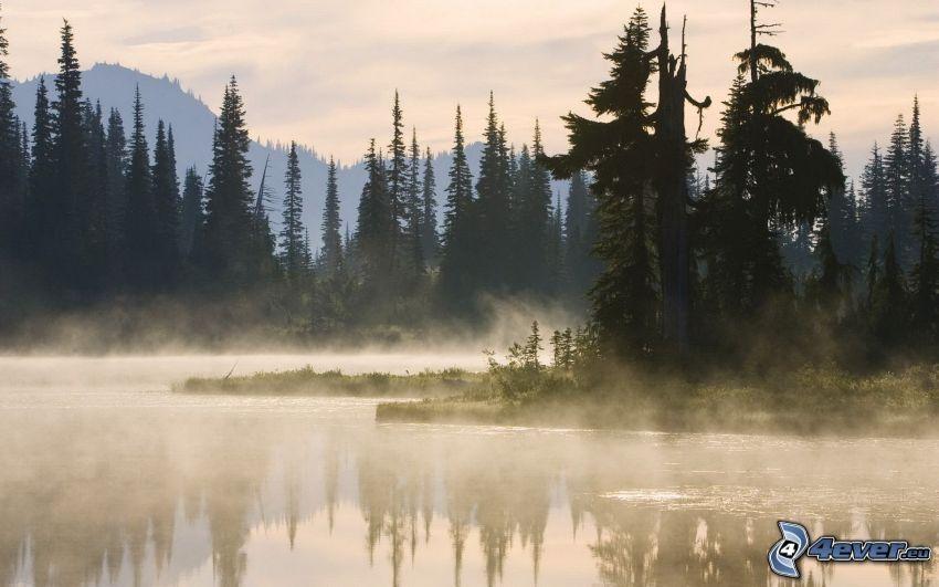 Nadelwald, Fluss, Dampf, Boden Nebel