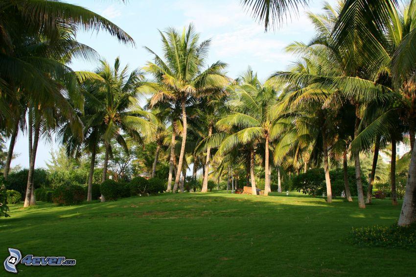 Palmen, grünes Gras