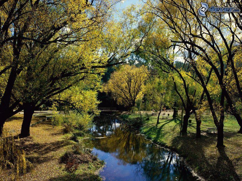 Park, Bäume, Bach