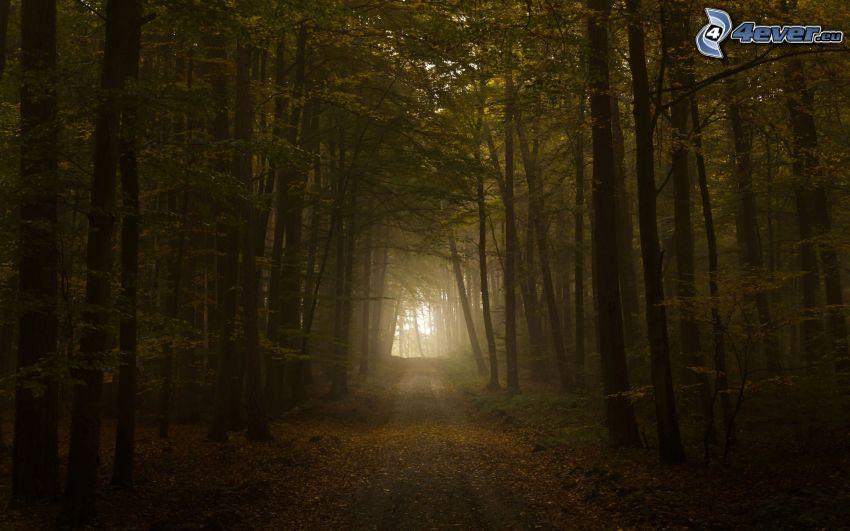 Pfad durch den Wald, Dunkler Wald