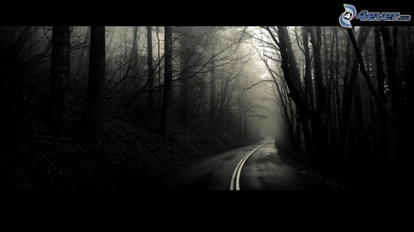 Pfad durch den Wald, schwarzweiß