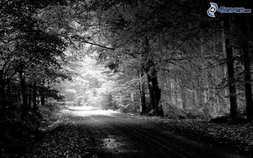 Pfad durch den Wald, Schwarzweiß Foto