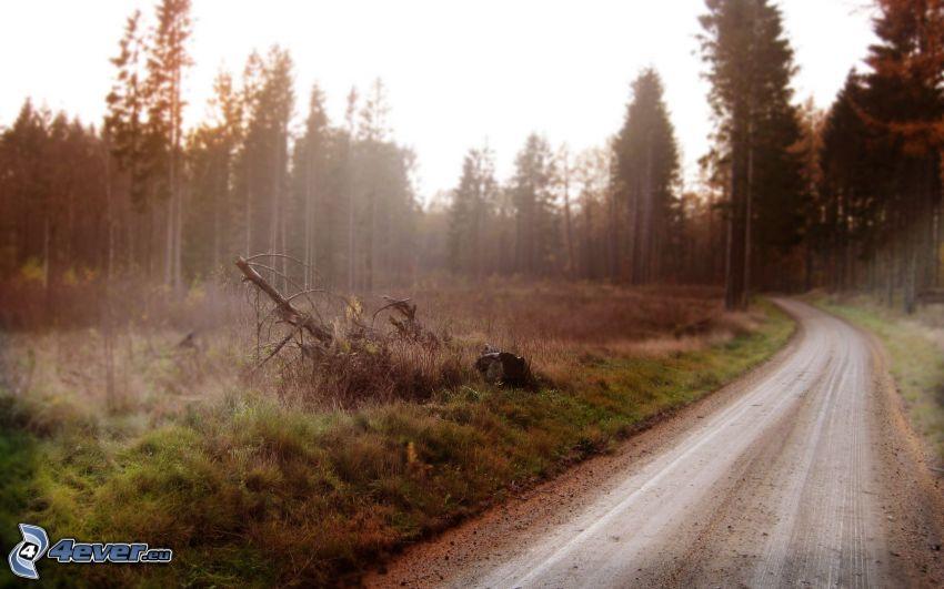 Pfad durch den Wald, Wald
