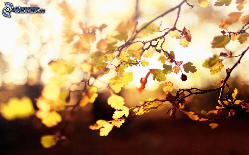 Äste, Blätter