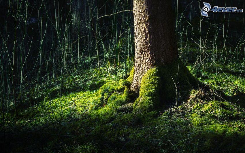 Baum, Moos