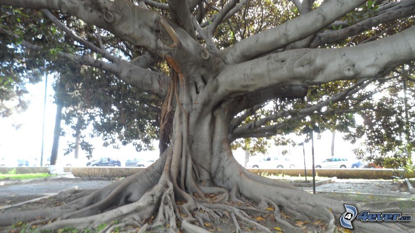 Baum, Wurzeln