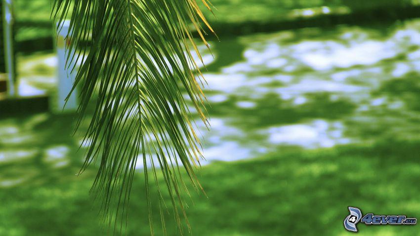 Blätter, Fluss