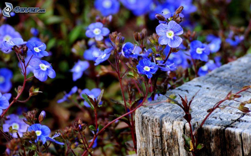 blaue Blumen, Holz
