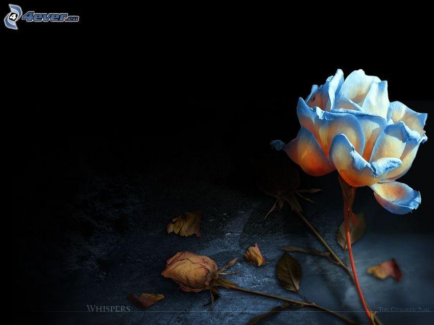 blaue Rose, Blätter