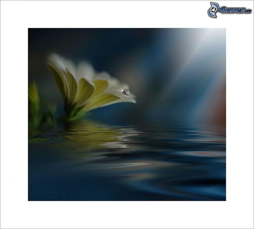 Blume im Wasser, Tropfen