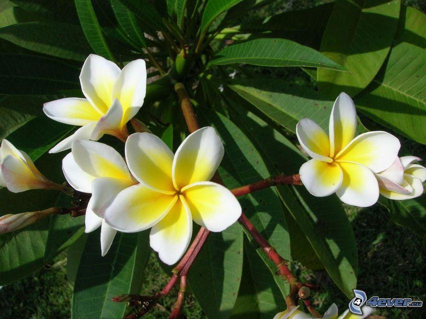 Blumen, Blätter