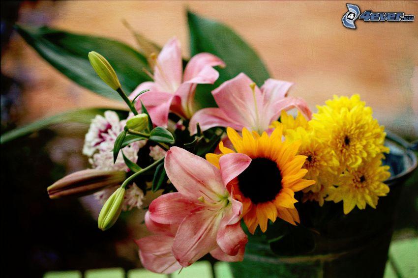 Blumen, Lilie, Sonnenblume